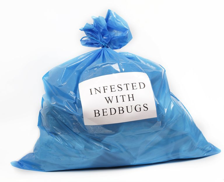 How to Avoid Bringing Bed Bugs Home from Work