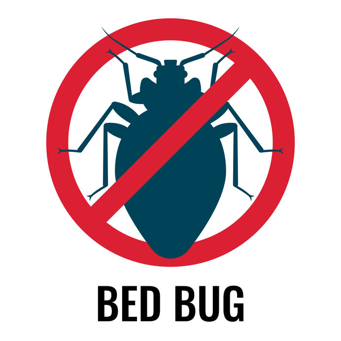 How to Hire a Pest Manager for Bed Bugs